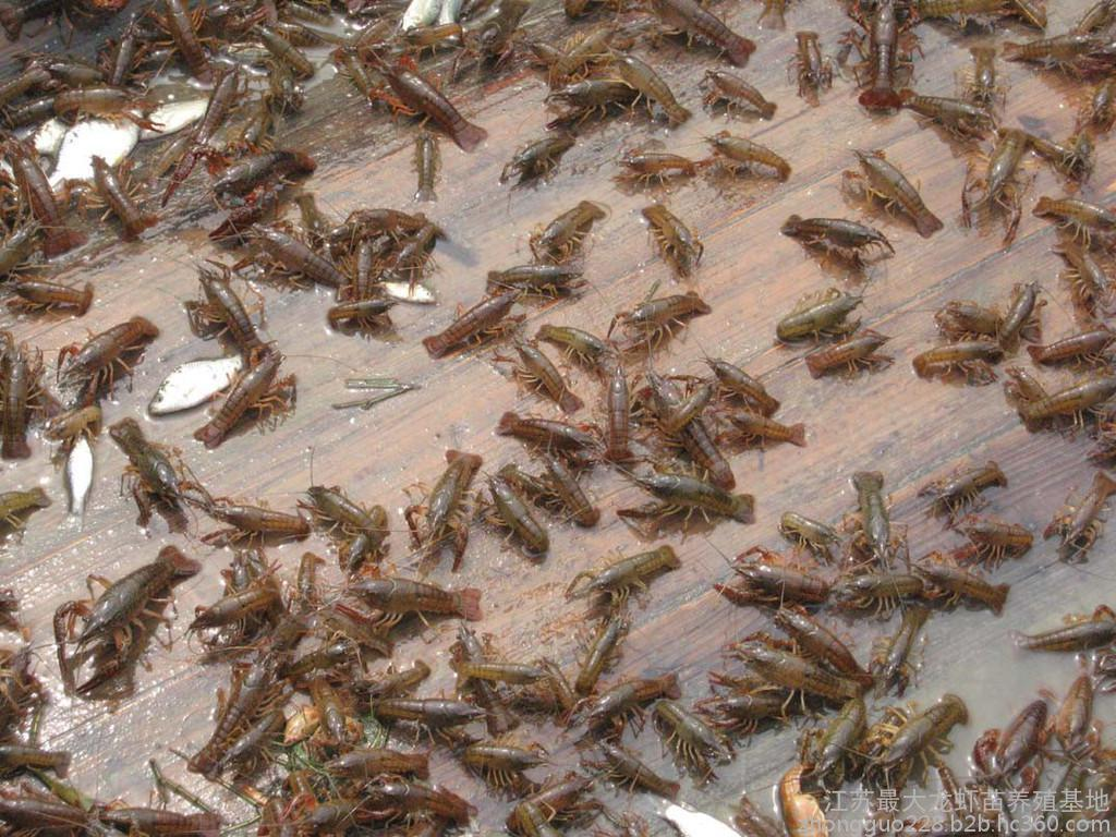 专业养殖种苗技术学习 好品种鱼苗养殖场 资阳市惠丰水产专业合作社