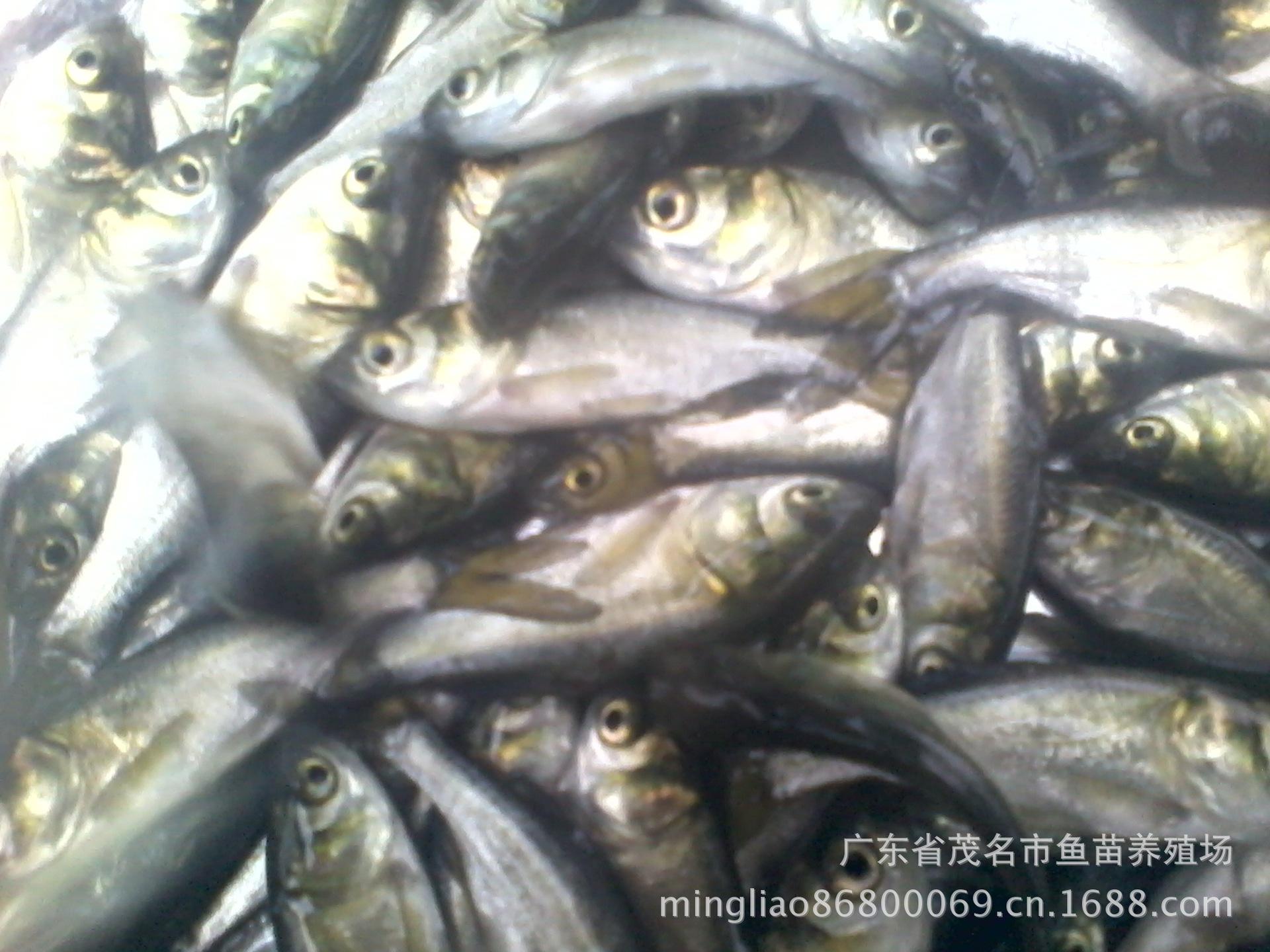 中国水产养殖代理在哪里_水产品招商加盟_资阳市惠丰水产专业合作社