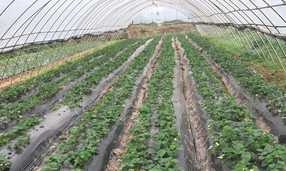 果园观光采摘园哪家好-资中血橙批发哪家好-资中县大千种植农民专业合作社