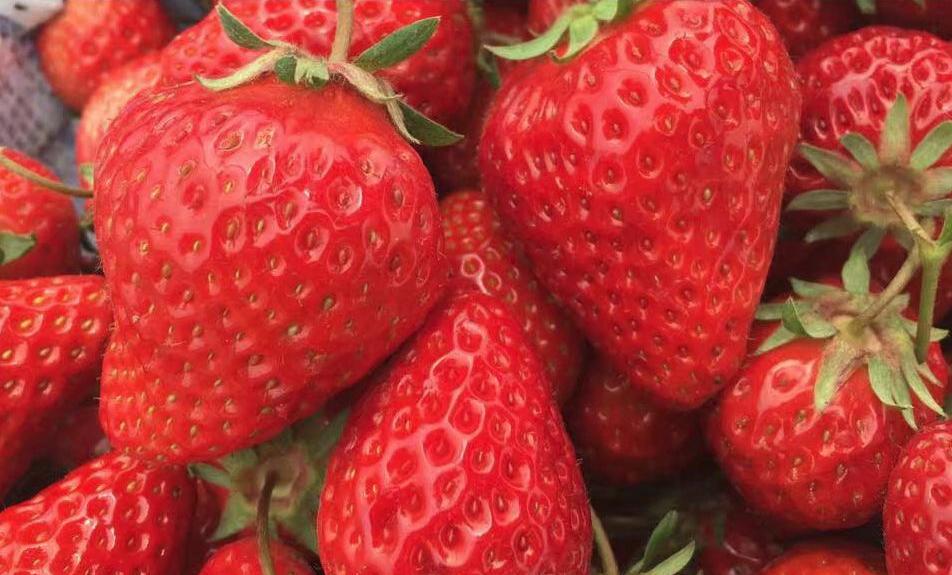资中周边草莓采摘园电话-四川8号血橙批发电话-资中县大千种植农民专业合作社