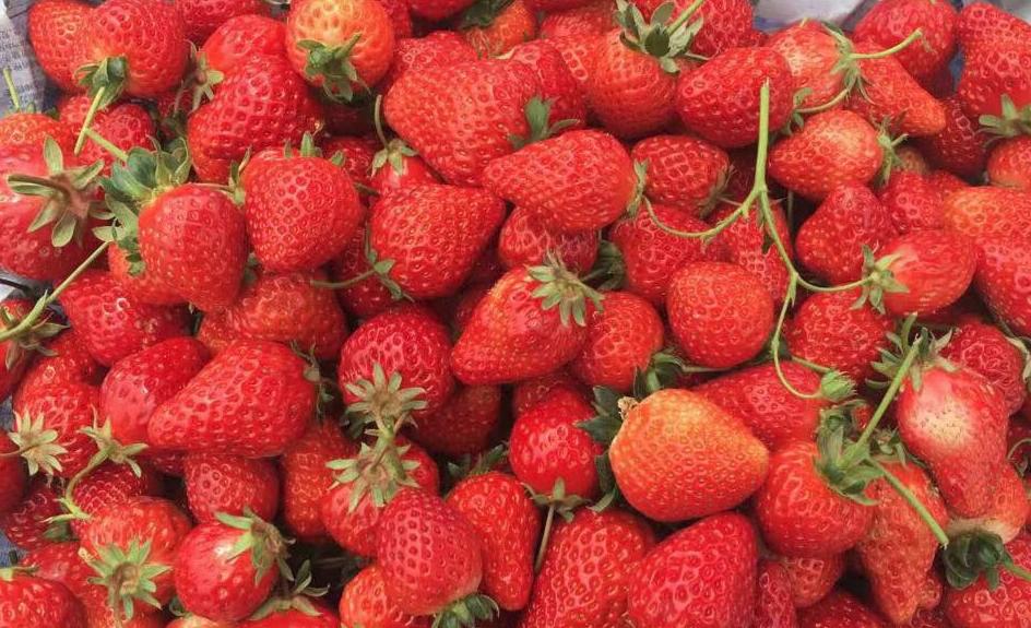 资中草莓多少钱一斤-正宗8号血橙批发多少钱一斤-资中县大千种植农民专业合作社