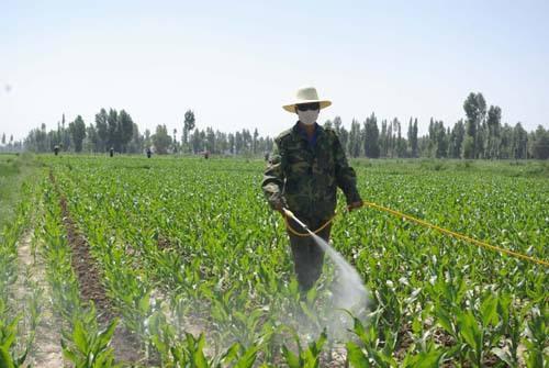 苗木莳植技能 优质面粉厂家 云南盛衍种业无限公司