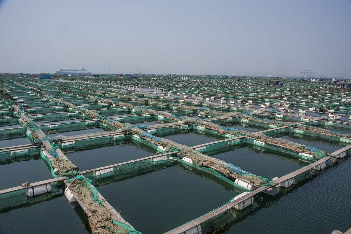 特种养殖-水产养殖项目-云南盛衍种业有限公司