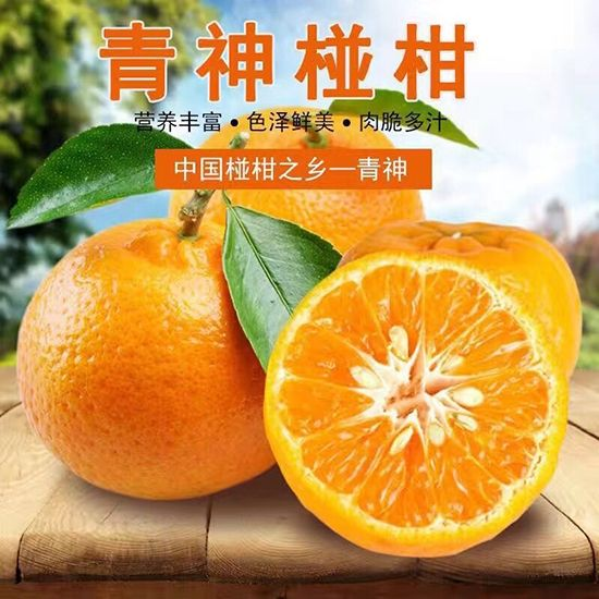 正宗青神椪柑批发物有所值 柑桔、橙、柚成都耙耙柑价格专业定制