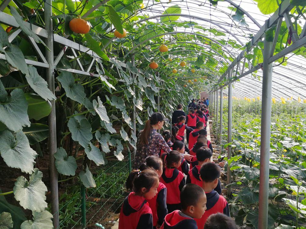 农业观光 有机绿色蔬?#22235;?#23478;好 重庆市圣垦农业开发有限公司