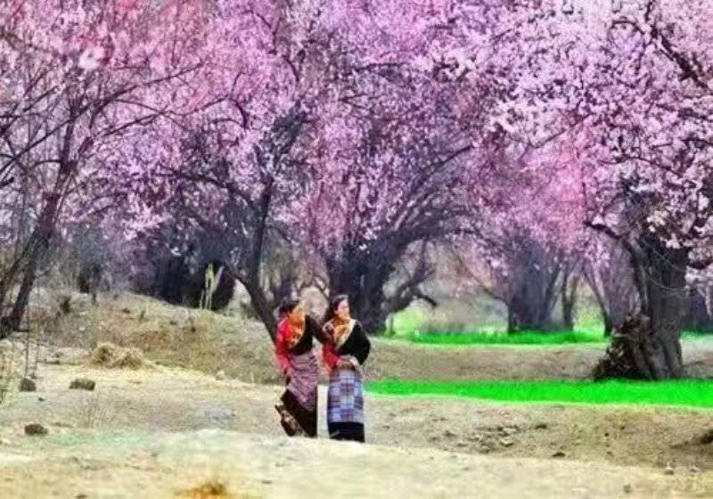林芝桃花节攻略 去西藏旅游要多少钱 成都云端西行户外运动有限公司