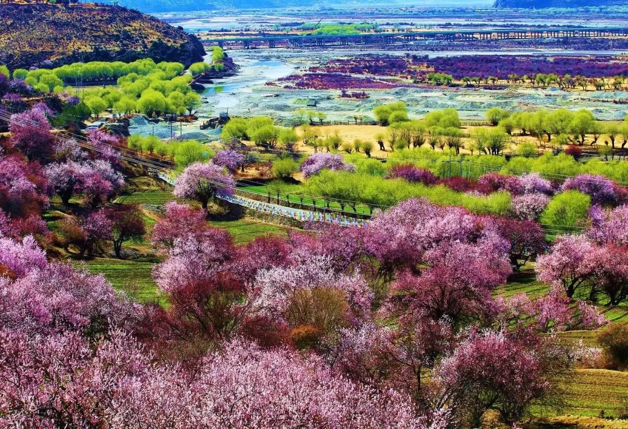 林芝桃花节攻略 西行318川藏线定制旅游 成都云端西行户外运动有限公司
