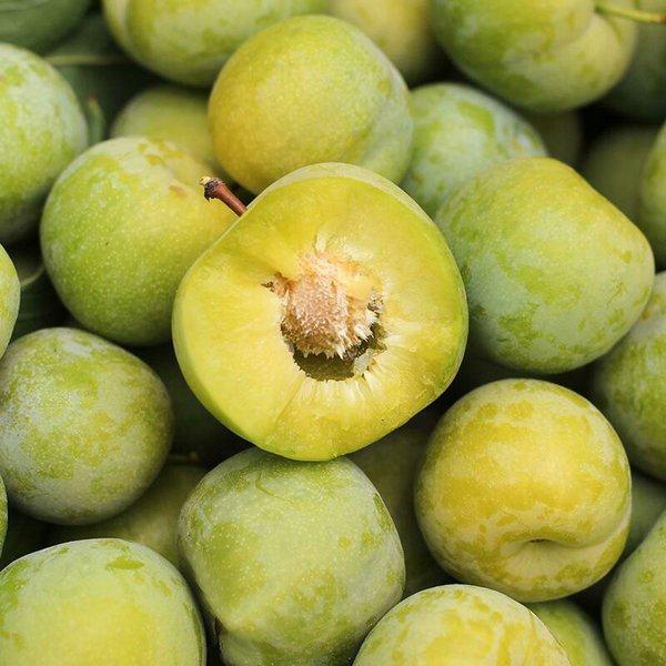 四川晚熟青脆李的价格是多少/绿心猕猴桃在哪里买/成都瑞坤农业有限公司