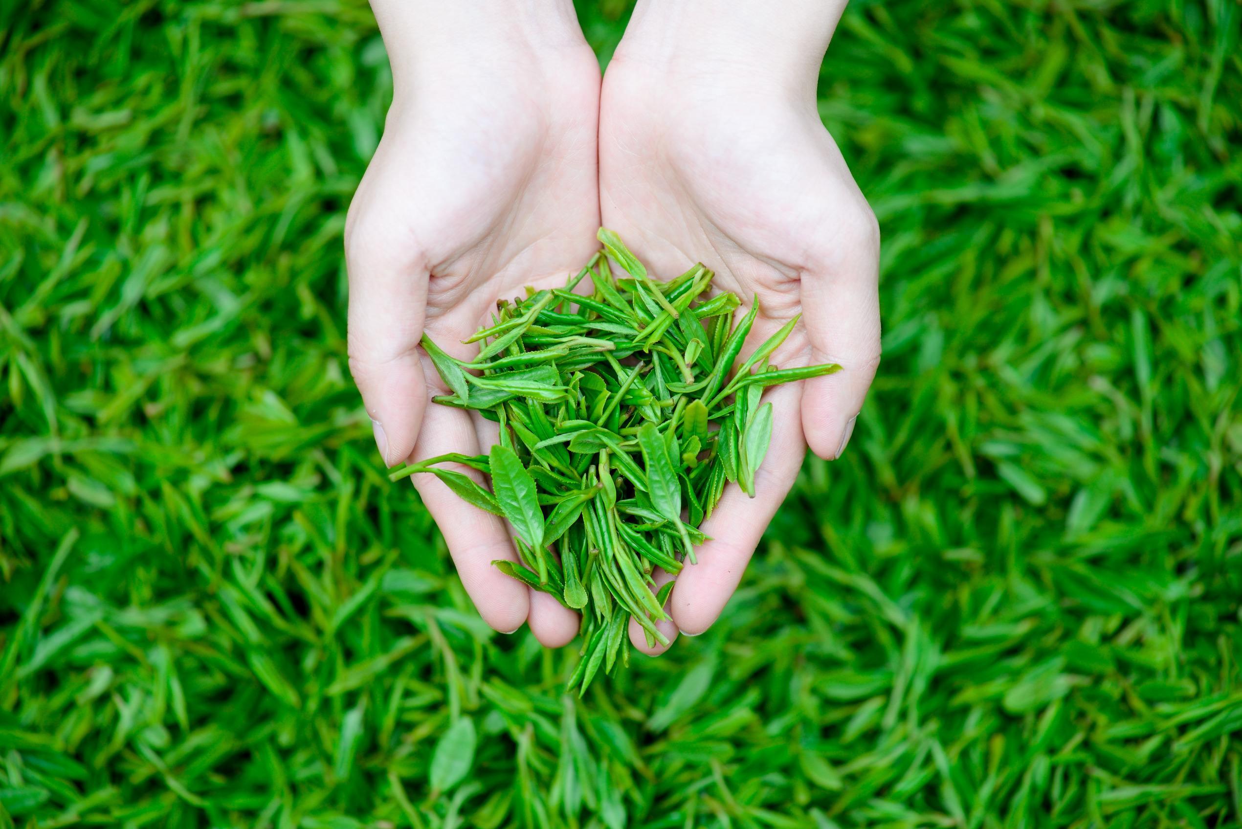我们推荐知名茶叶品牌专业定制 云南玉溪农产品批发市场诚信经营 蔬菜