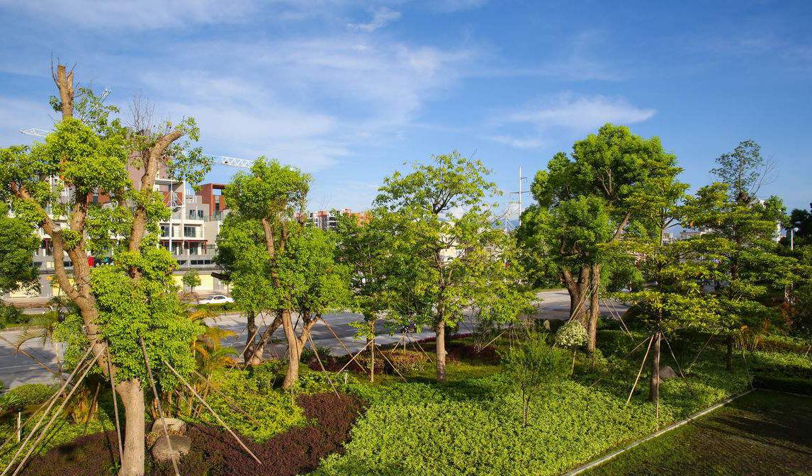 绿化新工艺新技术/绿化草坪价格/贵州常青园林建设有限公司
