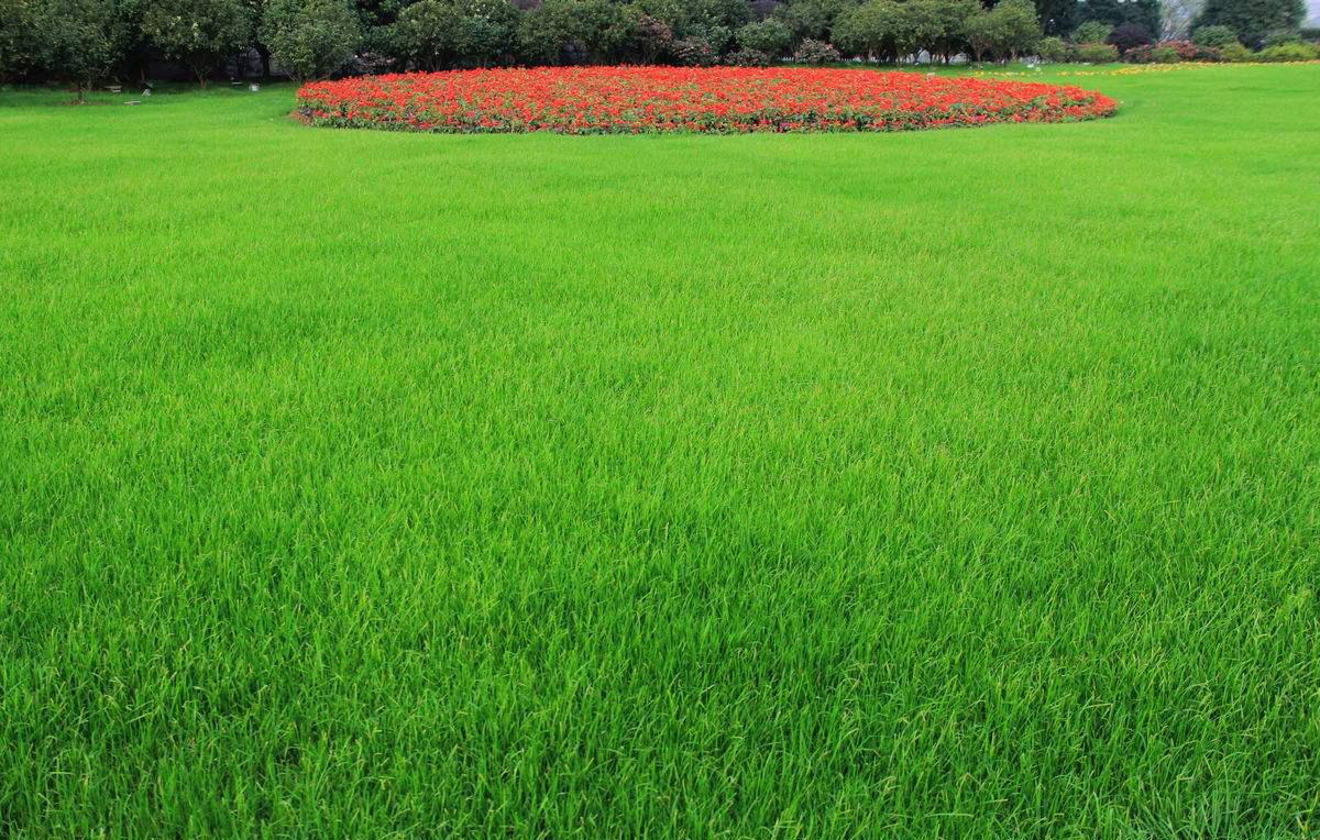 景观设计 高质量绿化草坪价钱厂家直销 我们引荐贵州园林绿化工程施工重磅优惠来袭