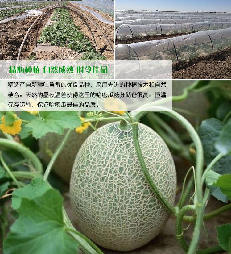 新鲜蓝莓价格_四川甜瓜多少钱一斤_成都宇昊电子商务有限公司