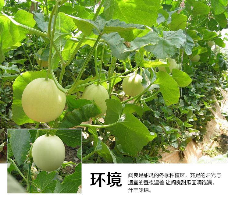 微商春见-蒲江红心猕猴桃水果礼盒-成都宇昊电子商务有限公司