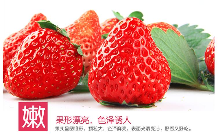 新鲜水果春见柑橘网上商城/蒲江不知火哪里有卖/成都宇昊电子商务有限公司
