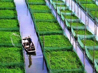 有机农业市场_特种农业种植致富信息_贵州辉煌农业开发有限公司