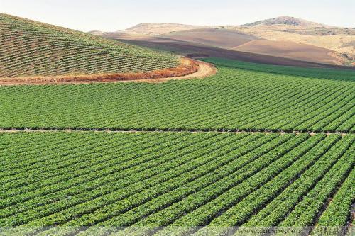 生态农产品交易网_豫贸网