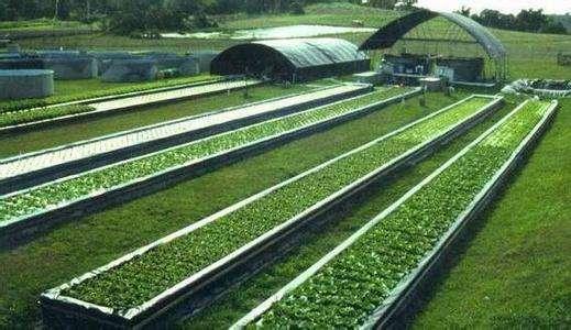 生态养殖市场前景_环球在线