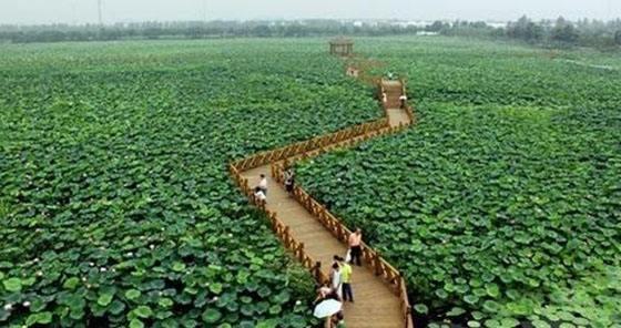 贵州农业发展现状_环球在线