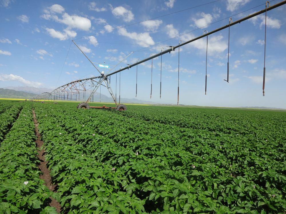 温室农业种植技术_环球在线