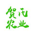 正宗生态田舍乐那边好玩诚信运营 农林牧渔项目合作江津特产野生甜茶价钱物有所值