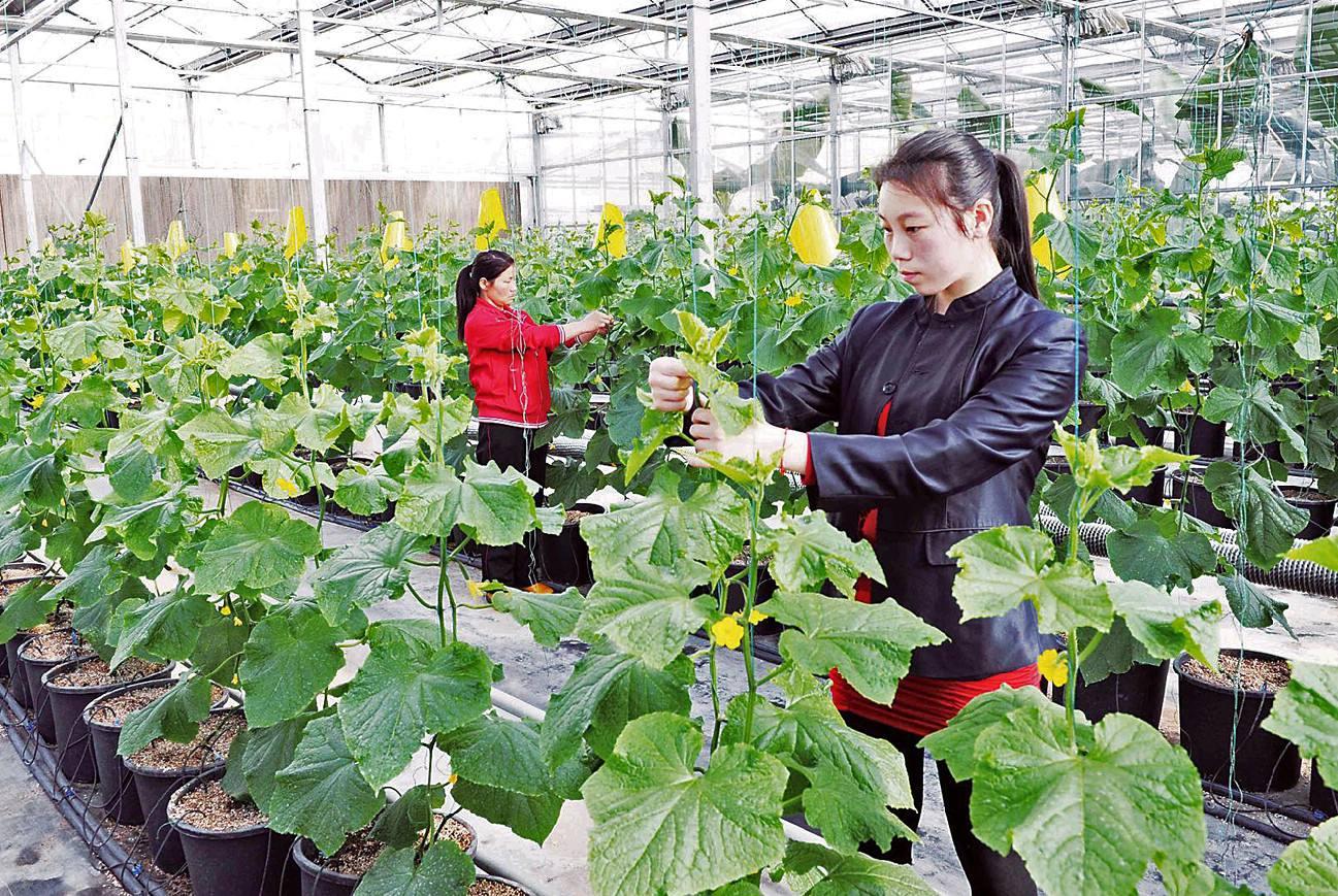 四川生态果蔬多少钱 放养鸡 四川盛世康源生态农业有限公司