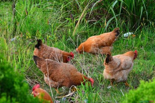 四川筠连粉条多少钱 优质生态牛肉哪家好 四川盛世康源生态农业有限公司