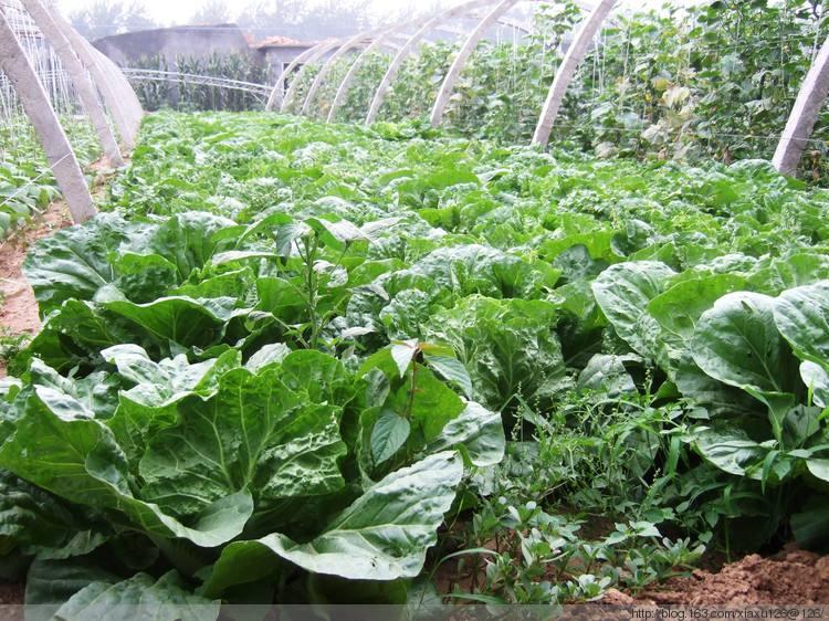 盛世康源有机蔬菜价格-盛世康源筠连粉条哪里买-四川盛世康源生态农业有限公司
