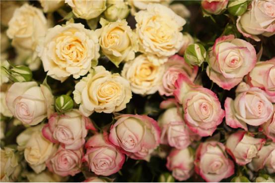 湖南花卉 中国草莓种苗网 湖南创世花都农业科技有限公司