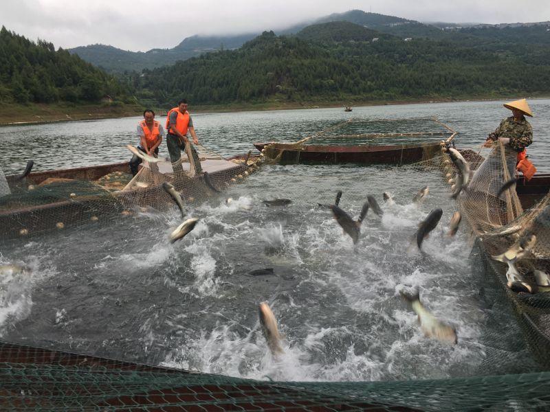 淡水生态鱼_中国食品与包装机械网