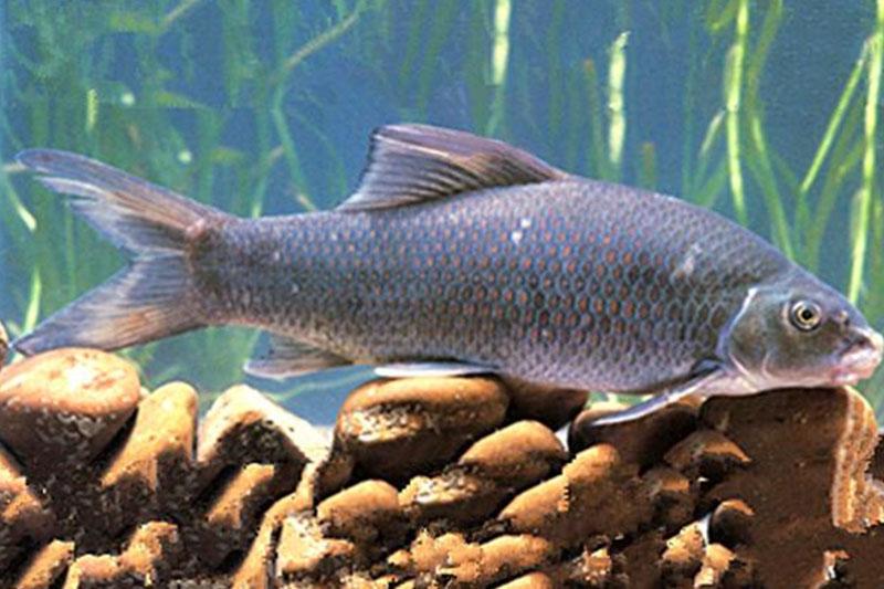 淡水生态鱼价格_淡水鱼类