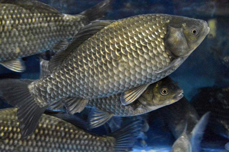 鲜活野生鱼_中国食品与包装机械网