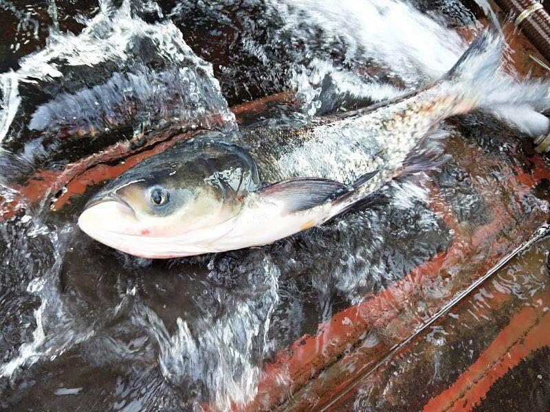 淡水有机鱼供应_中国食品与包装机械网