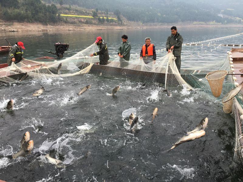 天然野生鱼多少钱_中国食品与包装机械网