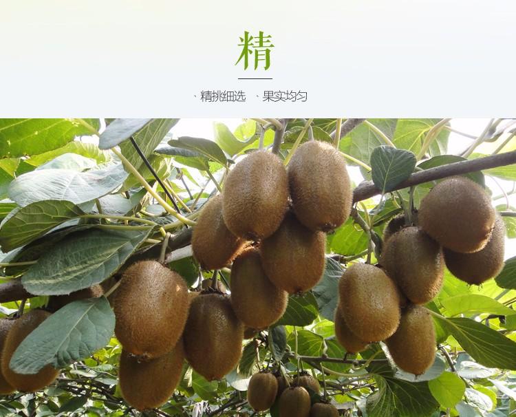 纯天然生态水果批发_商机网