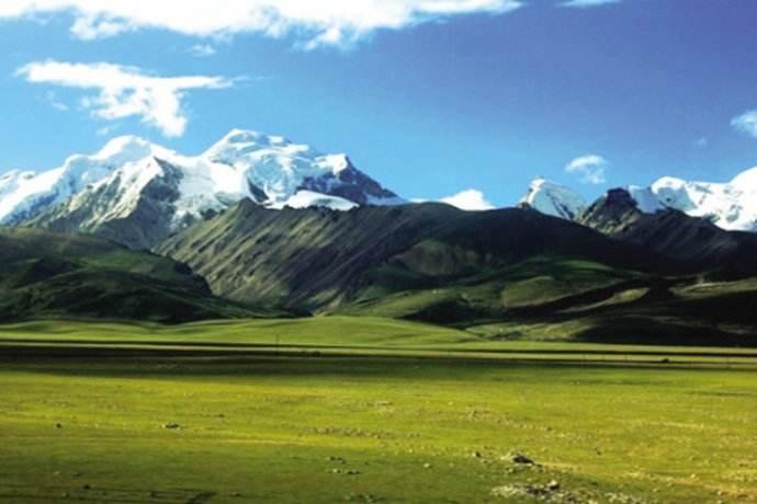 食用虫草哪里买_西藏东走西走网络科技有限公司