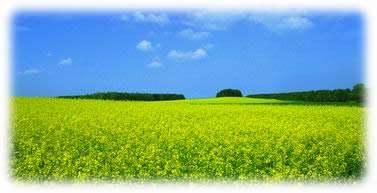 中国有机农业的示范基地_铝业网