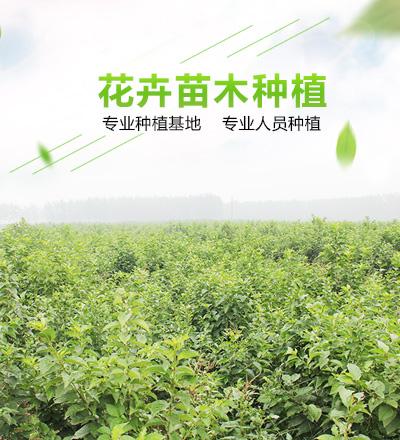 绿化花卉_绿化花卉种子、种苗