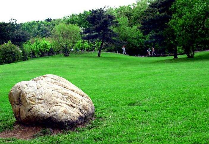 常绿草坪培育的方法_百慕大草坪相关-贵州常青园林有限公司