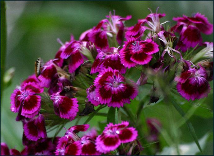 多年生花卉种子_华夏玻璃网