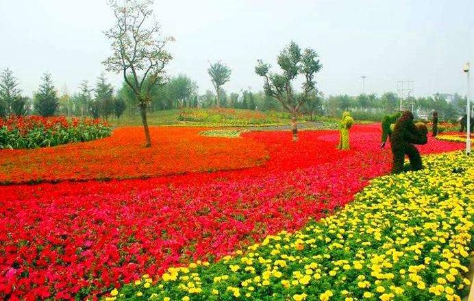 景观绿雕植物_西安沐恒园艺有限公司