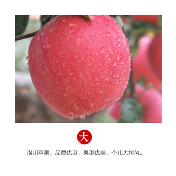 洛川紅富士蘋果_我幫網