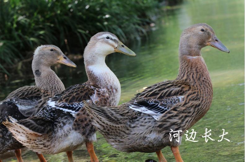 中国生态养殖_263商机网