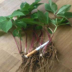 农作物肥料用哪种_众加商贸网