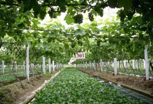 绵阳立体农业技术_360集讯