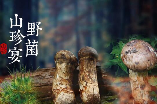 重庆野生菌类_可食用野生菌相关-石柱土家族自治县润淑生态农业发展有限公司