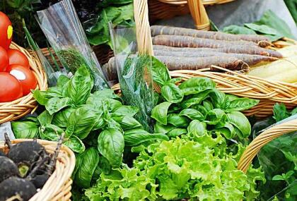 有机无公害蔬菜基地_纯天然其他新鲜蔬菜基地