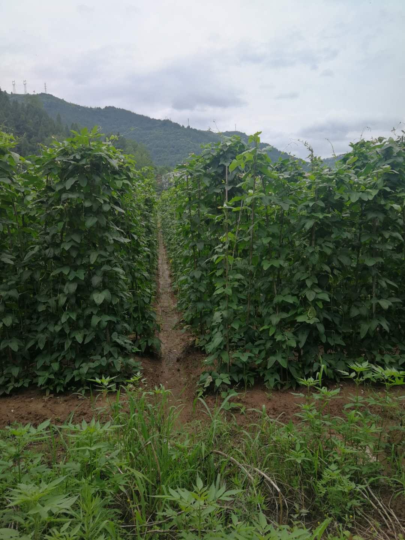 纯天然无公害蔬菜哪里买_纯天然其他新鲜蔬菜基地