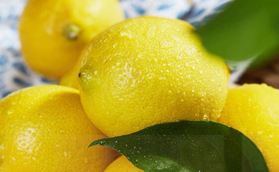 柠檬批发多少钱一斤_尤力克其他生鲜水果哪里买