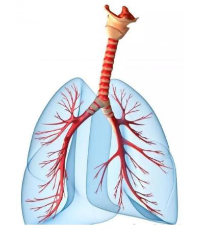支气管炎有什么症状_ 支气管炎吃什么药好相关-永川区谢远国中医诊所