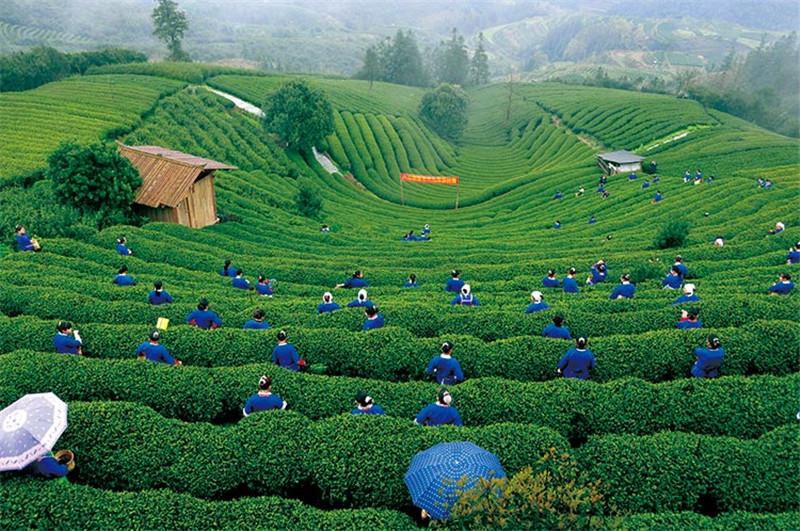 国庆旅游哪里好玩_旅游产品相关-遵义森宏农业科技有限公司